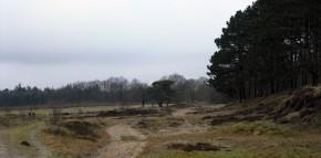 Langenberger Forst